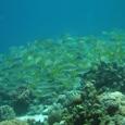 2007年3月 セブ島